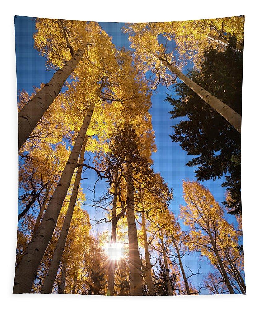 Aspen Grove Tapestry featuring the photograph Early Autumn Morning by Saija Lehtonen