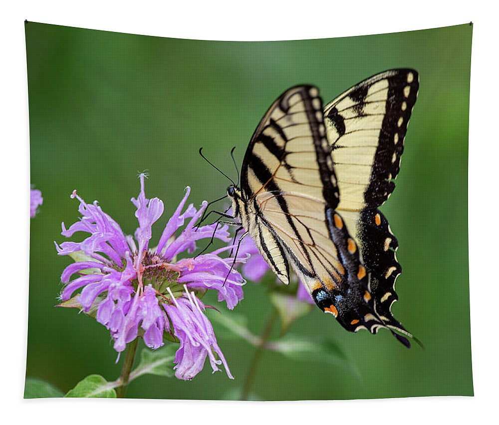 Eastern Tiger Swallowtail Tapestry featuring the photograph Eastern Tiger Swallowtail by Dale Kincaid