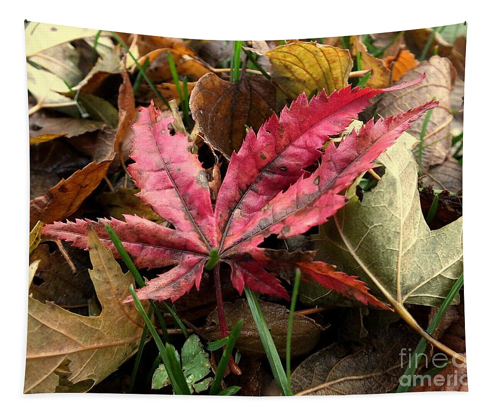 Autumn Tapestry featuring the photograph F2786 by Rae Lange