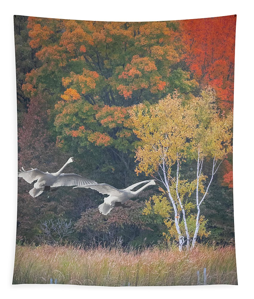 Swans Tapestry featuring the photograph Fall Swan Landing - Vertical by Patti Deters