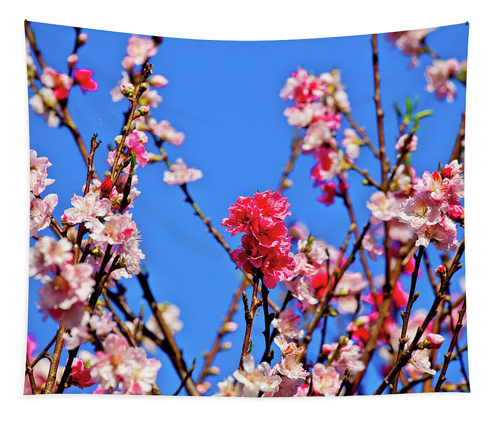 Australia Tapestry featuring the photograph Pinks And Blues by Az Jackson