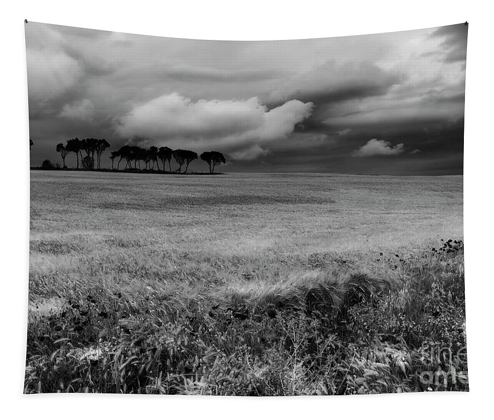 Nature Tapestry featuring the photograph Field With Poppies And Trees. B And W by Vicente Sargues