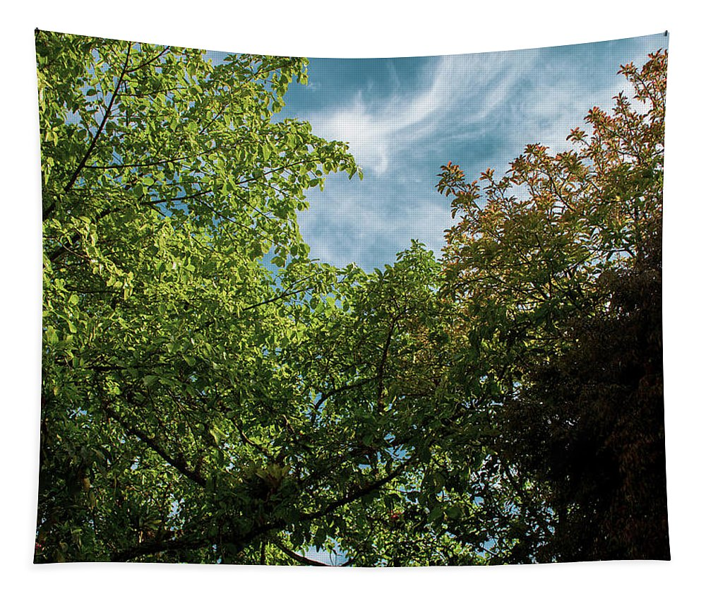 Trees Tapestry featuring the photograph Folhas De Outubro by Luciano Santos