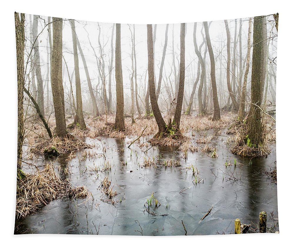 Tree Tapestry featuring the photograph Forest by Lichtfresser