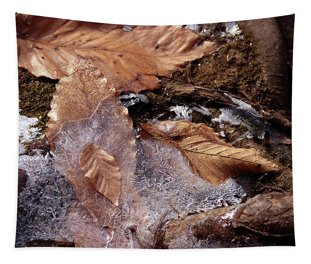 Leaves Tapestry featuring the photograph Frosty Morning by Tamara Jaeger