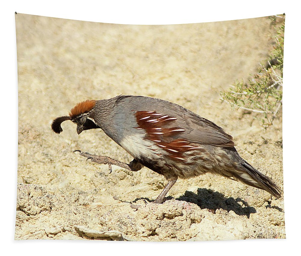 Gambel's Quail Tapestry featuring the photograph Gambel's Quail Dance by Maria Jeffs