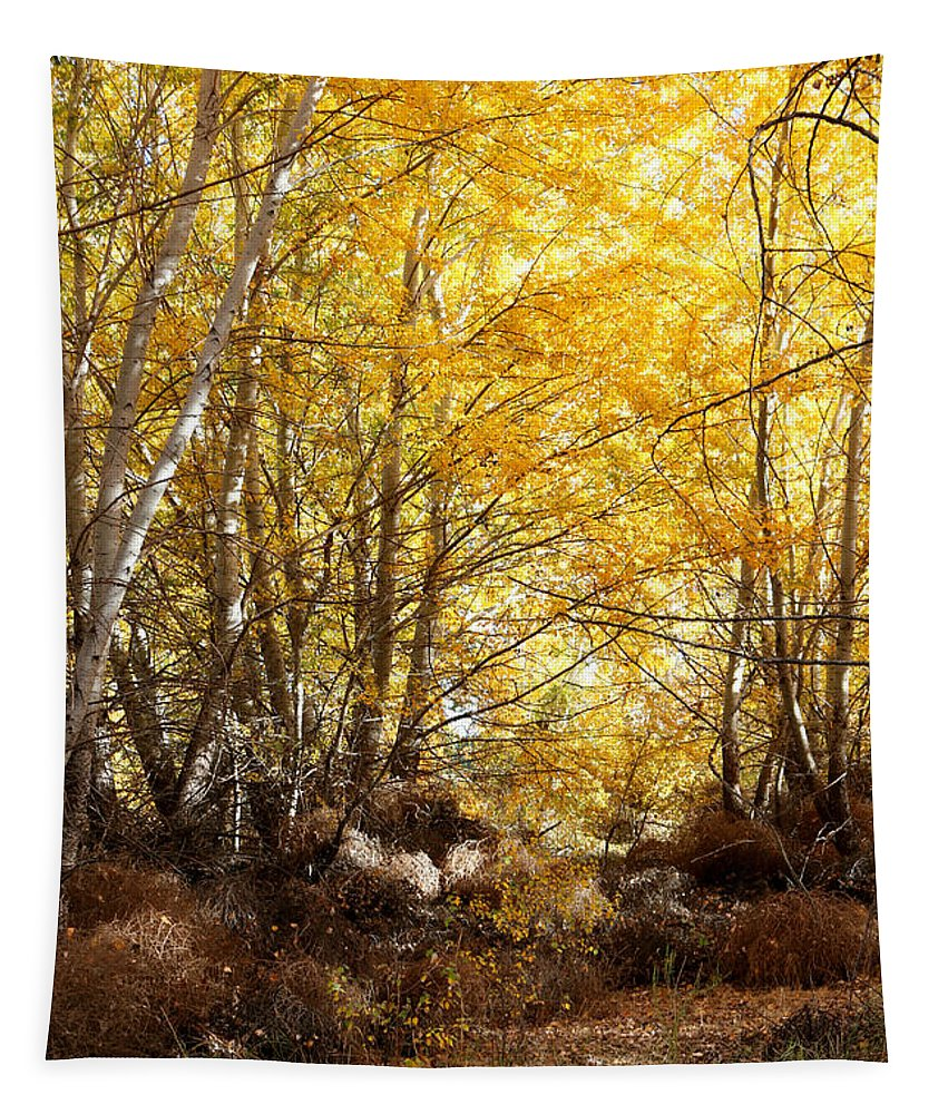 Sunlight On Fall Leaves Tapestry featuring the photograph Golden Autumn Light by Carol Groenen