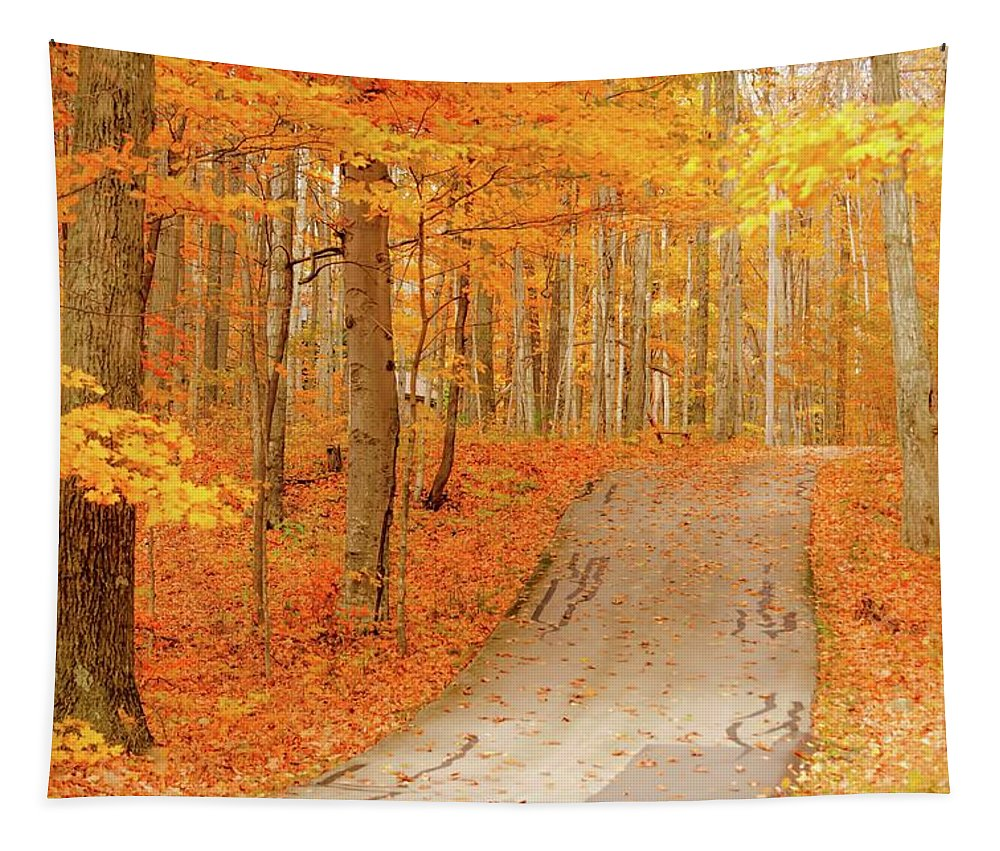 Autumn Tapestry featuring the photograph Golden Haven by Patti Raine