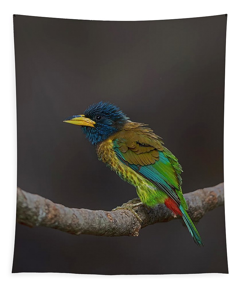 Bird Images For Print Tapestry featuring the photograph Great barbet by Uma Ganesh