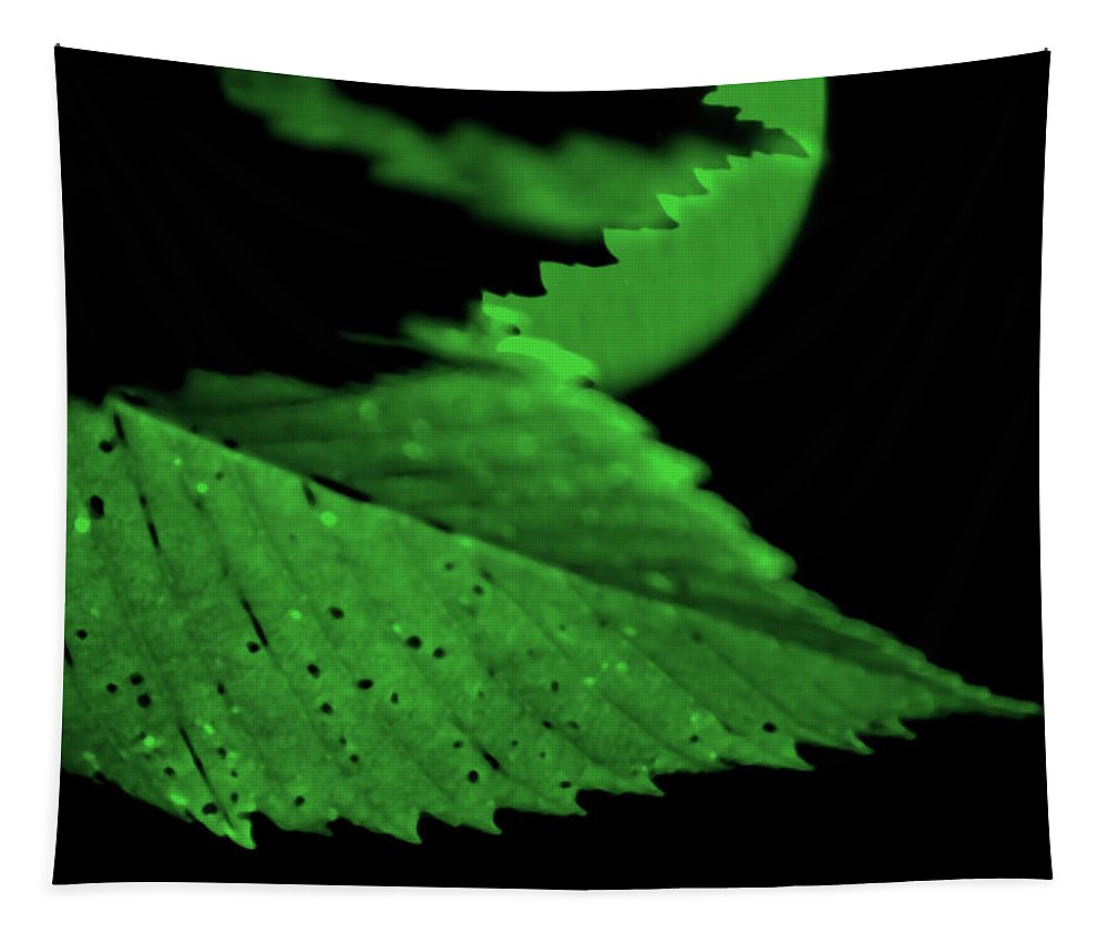 Leaf Tapestry featuring the photograph Green Leaf in Sun by Lonnie Paulson