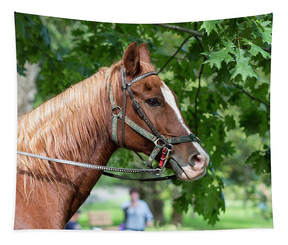 Horse Tapestry featuring the photograph Horse by Denise Harty
