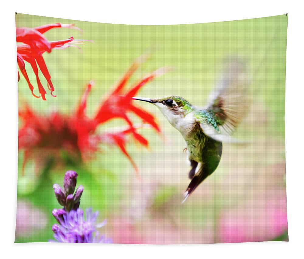 Hummingbird Flying Tapestry featuring the photograph Hummingbird Fancy by Christina Rollo