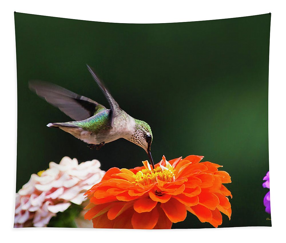 Hummingbird Tapestry featuring the photograph Hummingbird In Flight With Orange Zinnia Flower by Christina Rollo