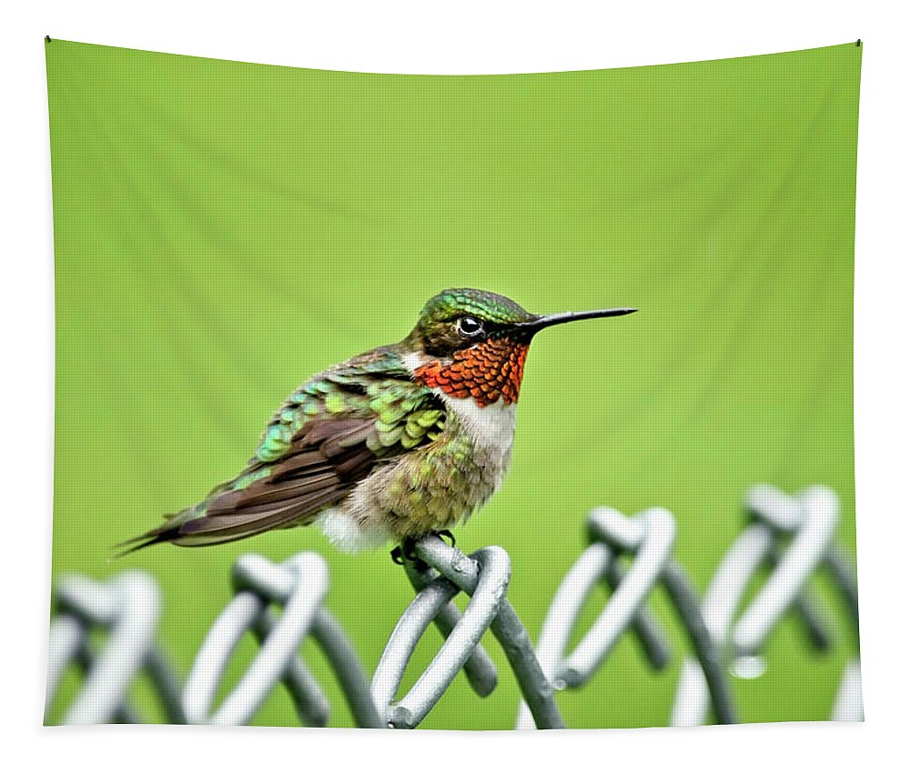 Bird Tapestry featuring the photograph Hummingbird On A Fence by Christina Rollo