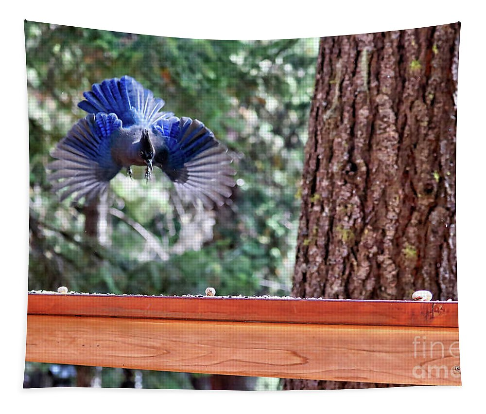 Steller's Jay Tapestry featuring the photograph Incoming Steller's Jay by Carol Groenen
