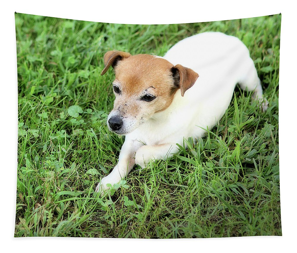 Jack Russell Tapestry featuring the photograph Jake Russell by Robert McCubbin