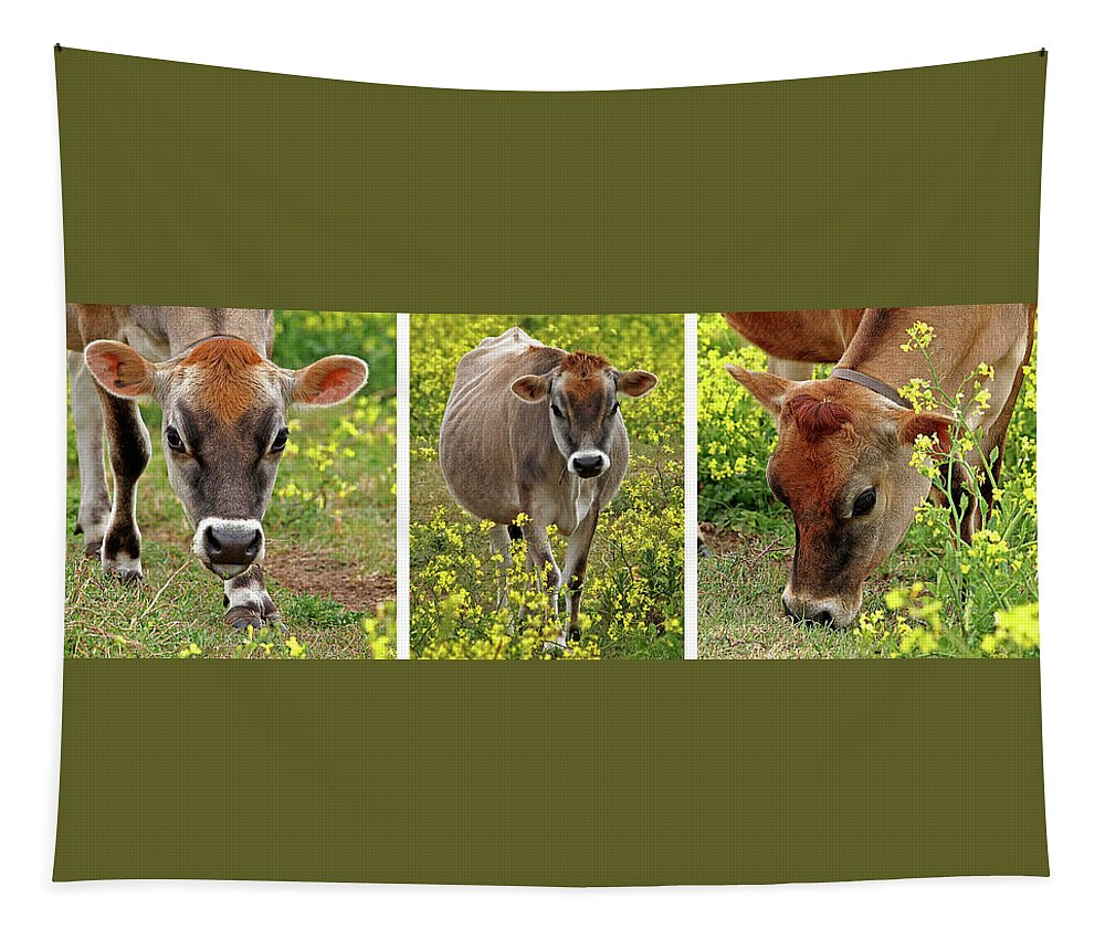 Jersey Cow Tapestry featuring the photograph Jersey Fields Of Gold by Gill Billington