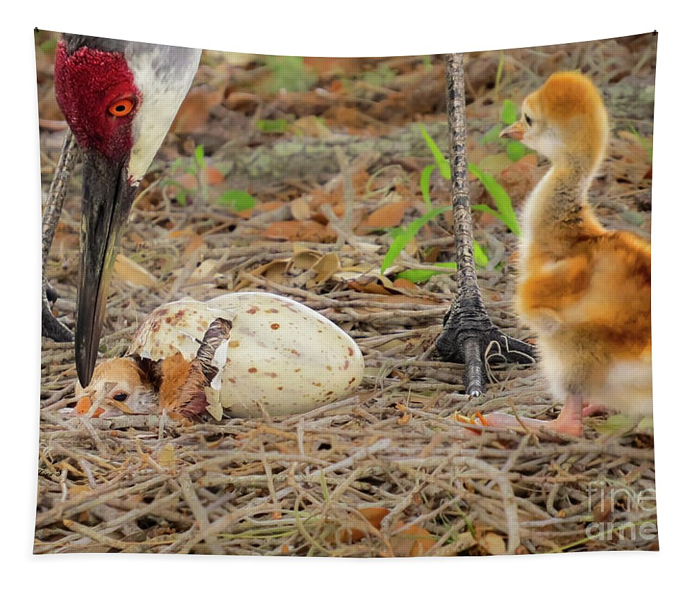 Sandhill Cranes Tapestry featuring the photograph Just Hatching by Zina Stromberg