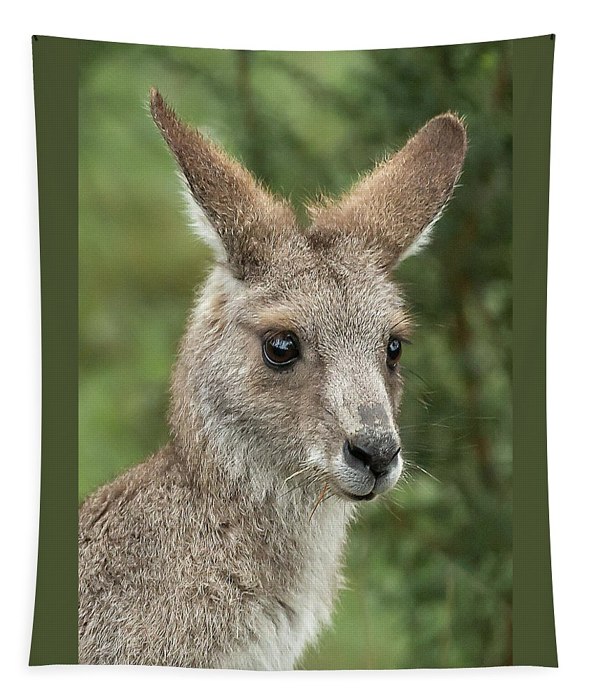 Kangaroo Tapestry featuring the photograph Kangaroo Up Close by Barry Kearney