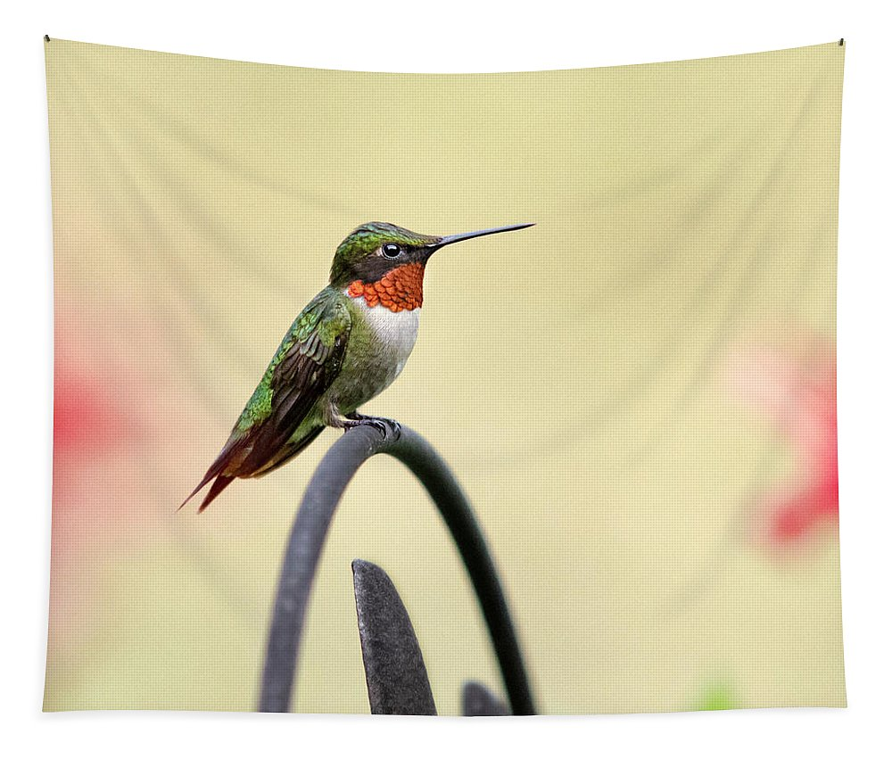 Little Hummingbird Tapestry featuring the photograph Little Hummingbird by Christina Rollo