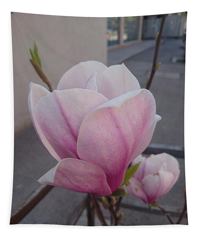 Tapestry featuring the photograph Magnolia by Anzhelina Georgieva