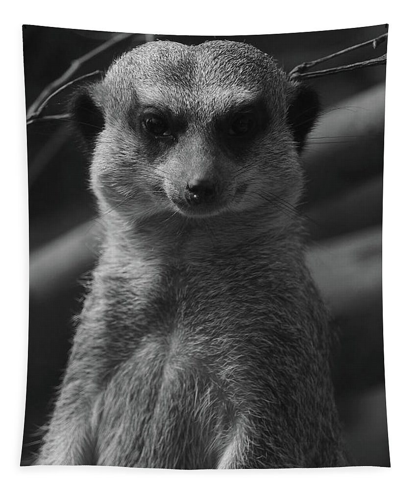 Meerkat Tapestry featuring the photograph Meerkat Bw Pose by Eddie Barron