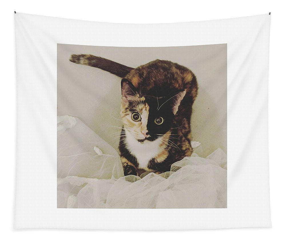 Cute Cat Tapestry featuring the photograph Meet Star by Star And Ray