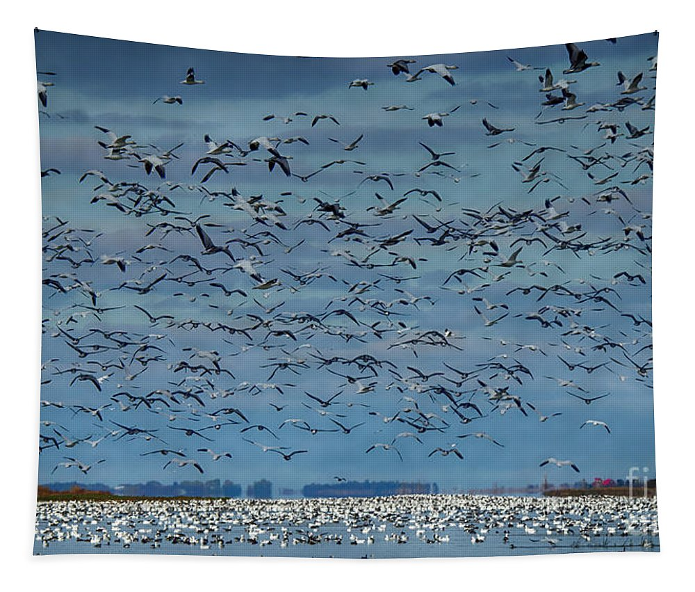 Migration Of The Snow Geese Tapestry featuring the photograph Migration Of The Snow Geese by Bob Christopher