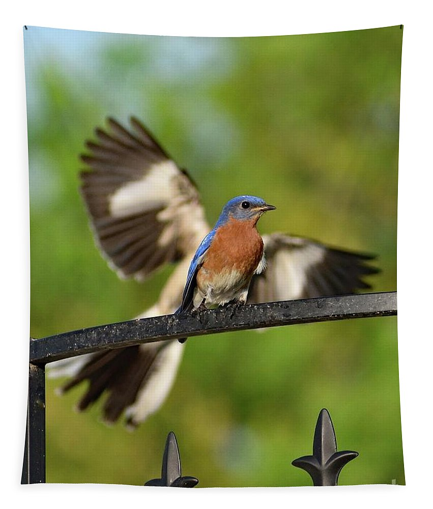 Eastern Bluebird Tapestry featuring the photograph Mocking Bluebird Photo Bomb by Cindy Treger