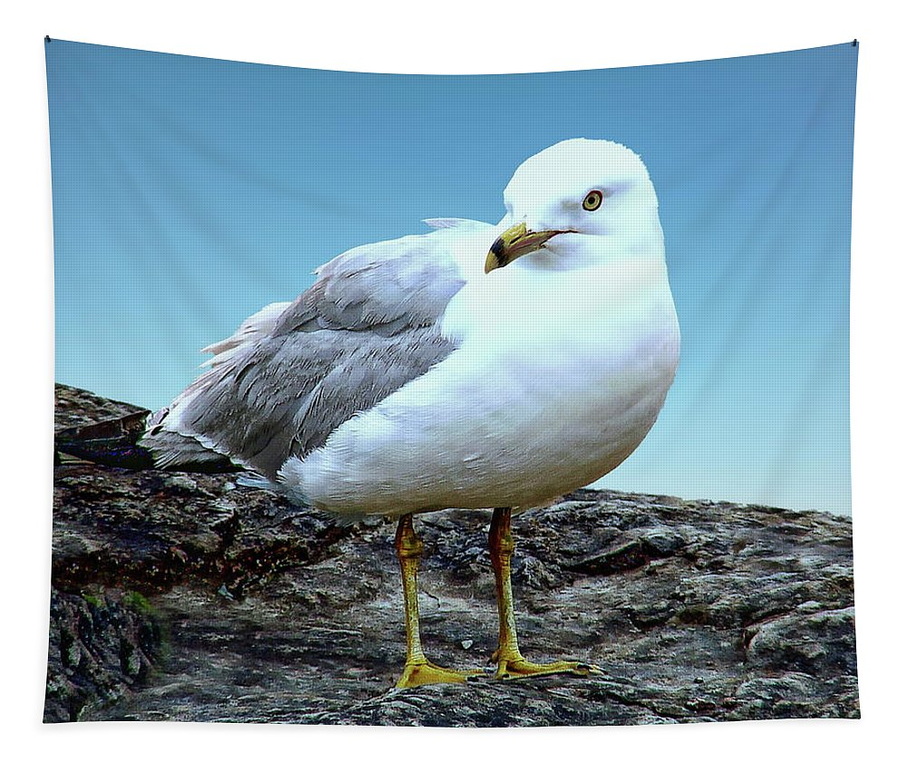 Seagull Tapestry featuring the photograph Moewe Seagull by Anthony Dezenzio