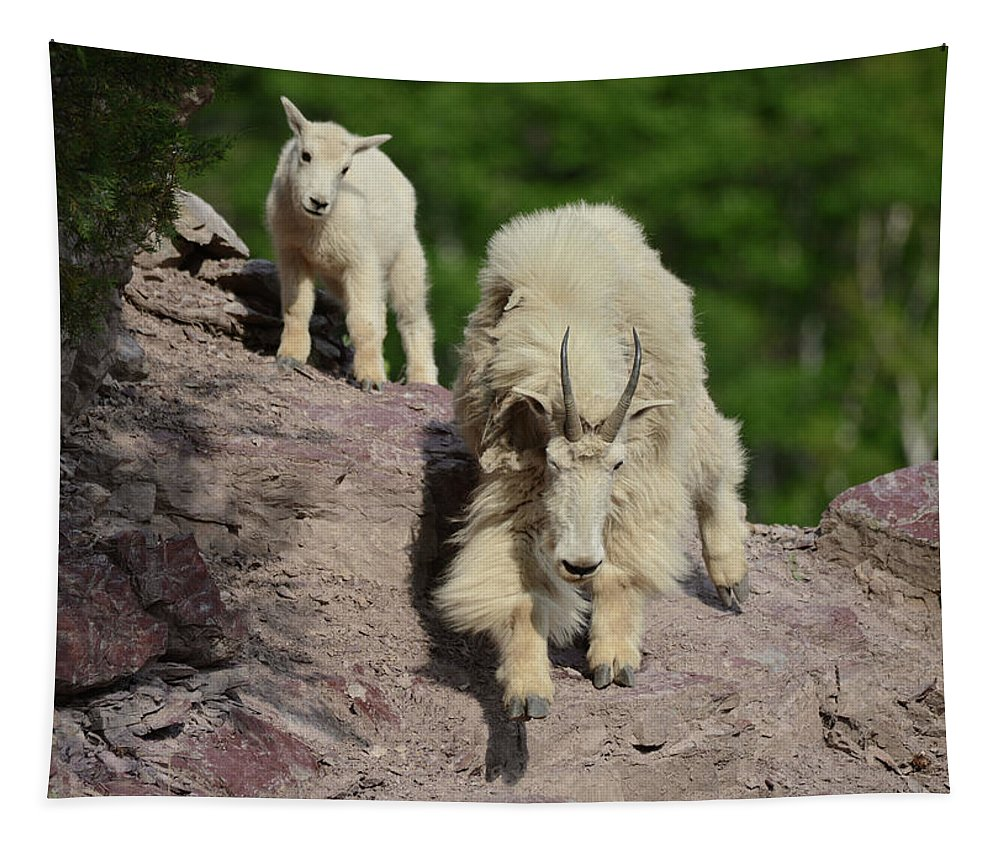 Mountain Goats Tapestry featuring the photograph Mountain Goats- Nanny And Kid by Whispering Peaks Photography