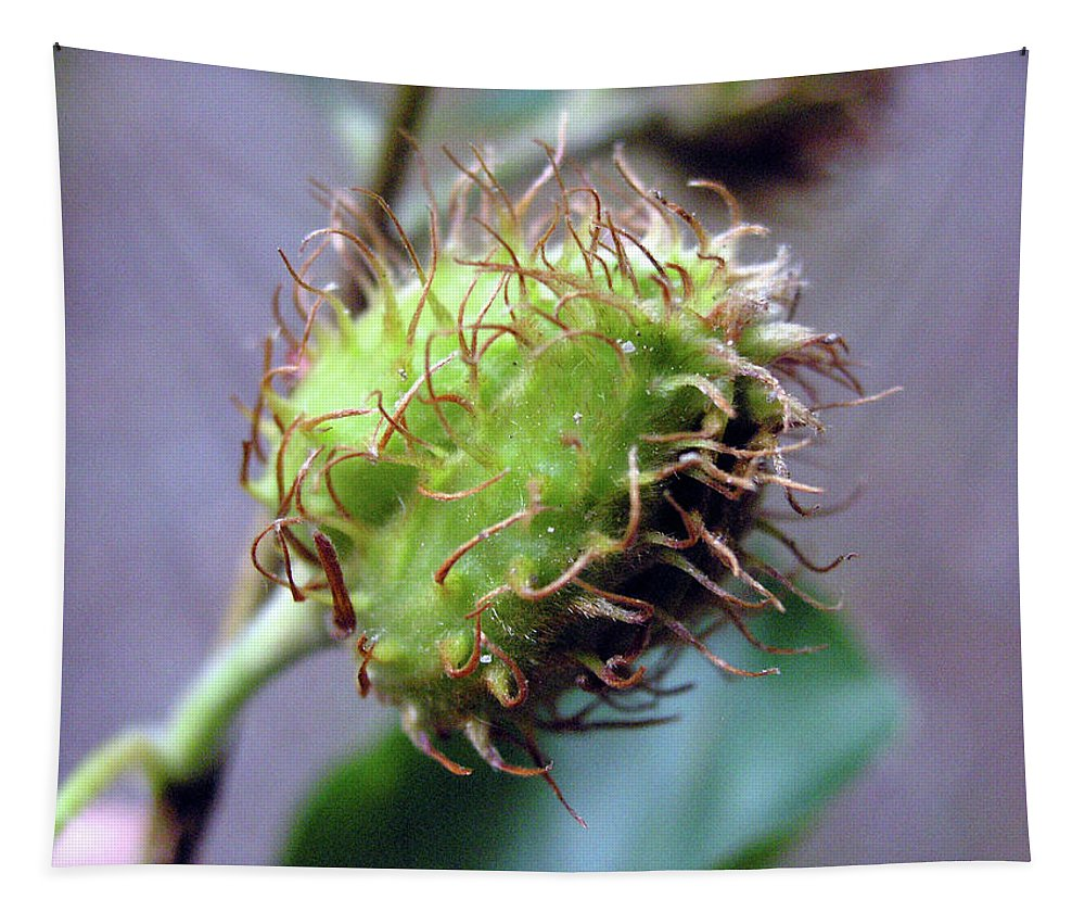 Photo Tapestry featuring the photograph Photography Macro Shot Of A Beechnut by PM Artistic