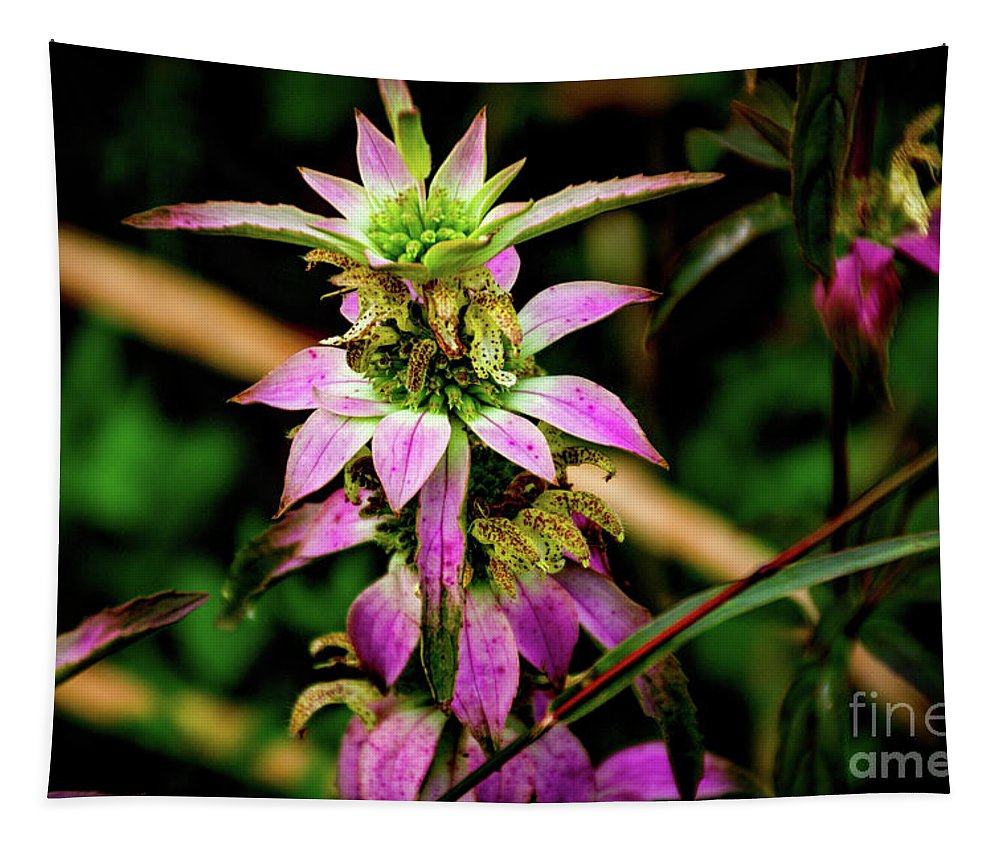 Pink Tapestry featuring the photograph Pink Wildflower by William Norton