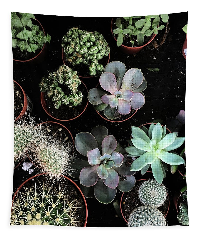 Plants Tapestry featuring the photograph Plant Collection by Cassia Beck