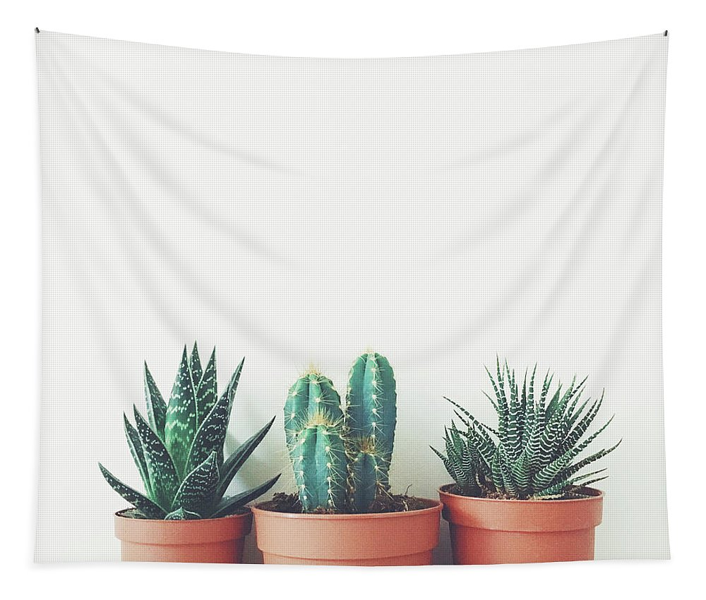 Plants Tapestry featuring the photograph Potted Plants by Cassia Beck