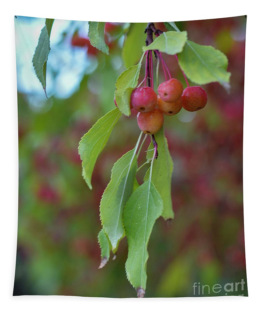Cherries Tapestry featuring the photograph Pretty Cherries Hanging From Tree by Brenda Landdeck