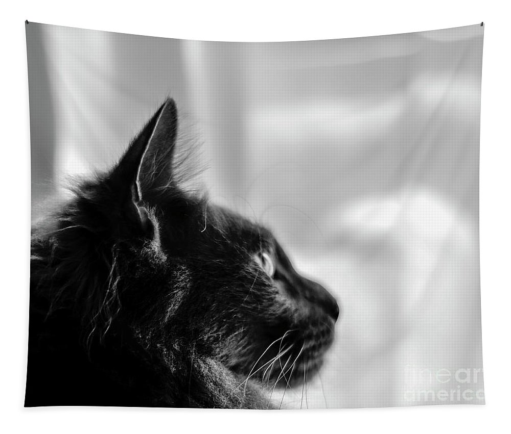 Black Tapestry featuring the photograph Profile Of A Long Haired Cat In Window by Brenda Landdeck