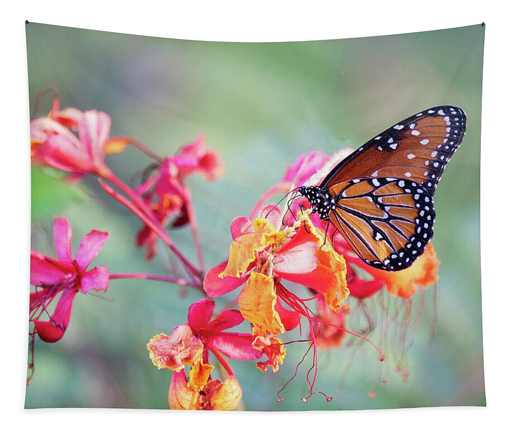 Queen Butterfly Tapestry featuring the photograph Queen Butterfly On Mexican Bird Of Paradise by Saija Lehtonen