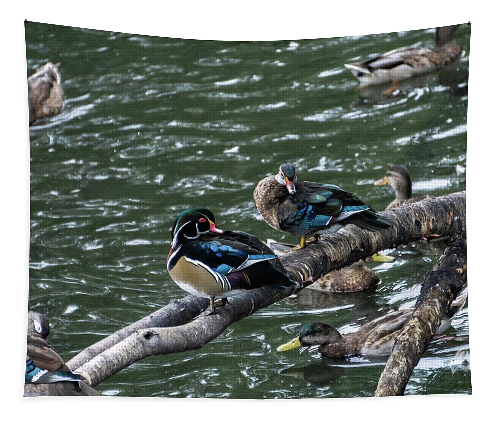 Duck Tapestry featuring the photograph Resting Ducks by Rob Olivo