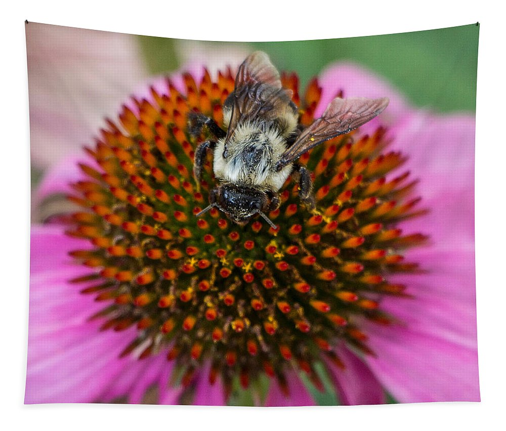 Flowers Tapestry featuring the photograph Rudbeckia Coneflower With Bee, Canada by Venetia Featherstone-Witty