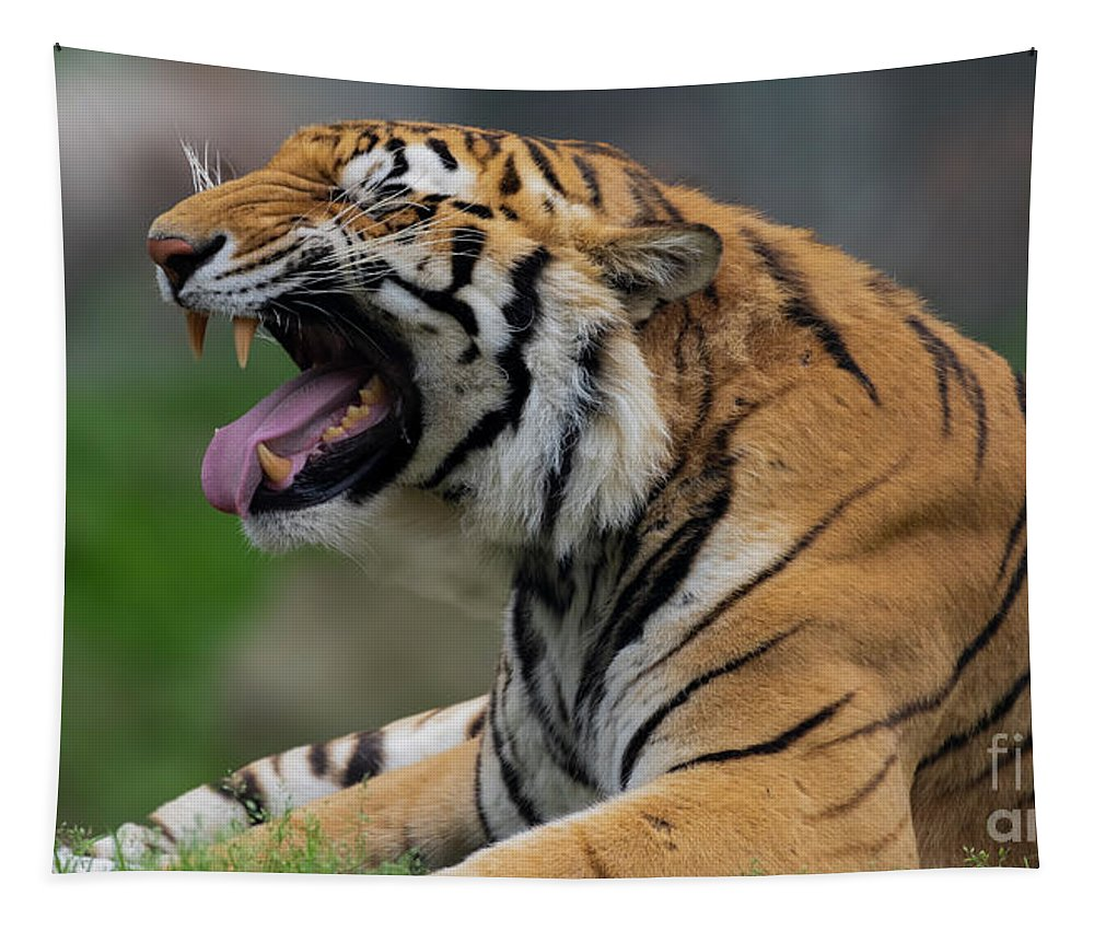 Tiger Tapestry featuring the photograph Say Ahhhhhhh by Sam Rino