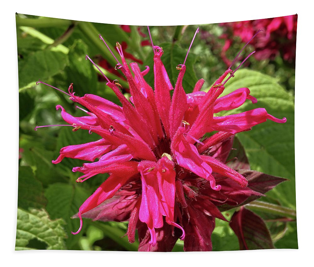 Red Tapestry featuring the photograph Scarlet Beebalm by Scott Kingery