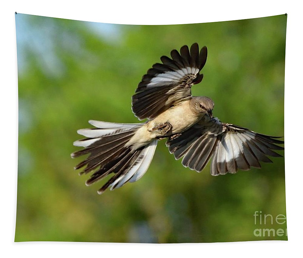 Wall Art Tapestry featuring the photograph Showoff Northern Mockingbird by Cindy Treger