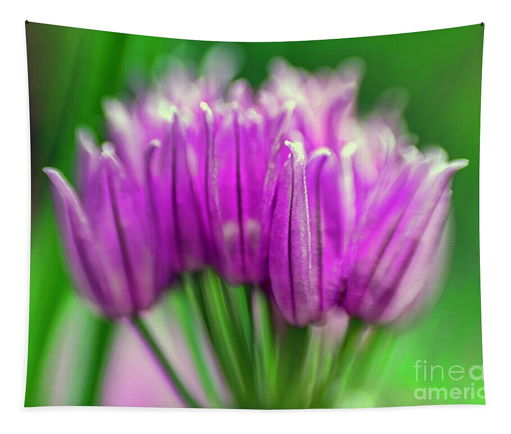 Small Tapestry featuring the photograph Small Details by Jean OKeeffe Macro Abundance Art