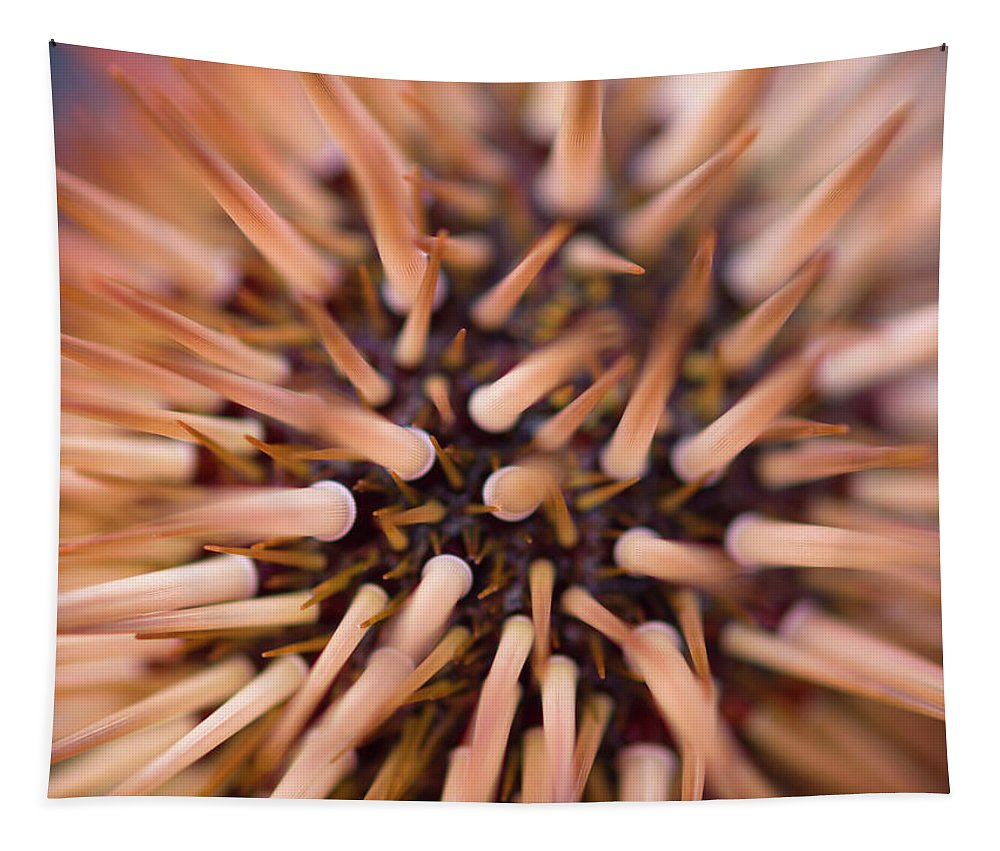 Urchin Tapestry featuring the photograph Spiny Urchin by Christopher Johnson