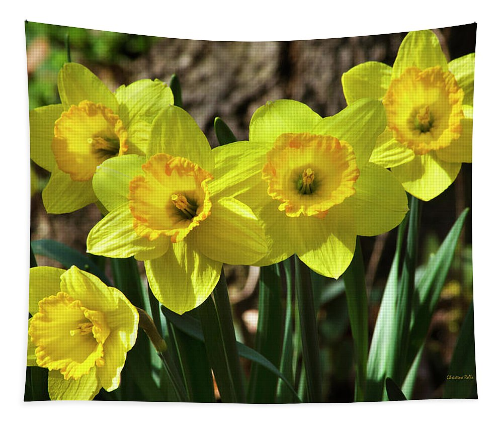 Daffodils Tapestry featuring the photograph Spring Daffodils by Christina Rollo