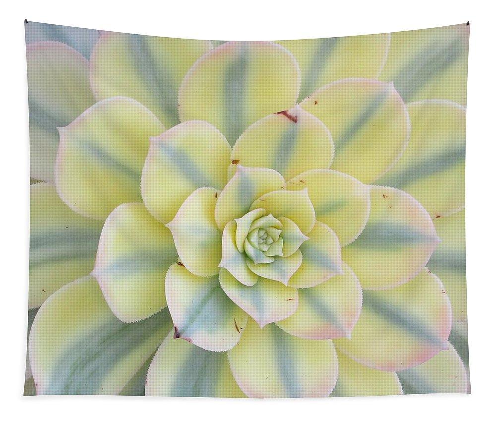 Succulent Tapestry featuring the digital art Succulent Aeonium Sunburst by Wilma Barnwell