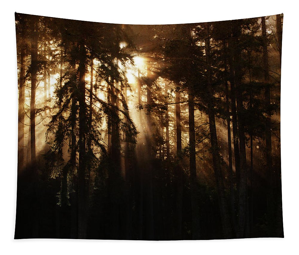 Sunrise Tapestry featuring the photograph Sultry Morning Radiance by Tikvah's Hope