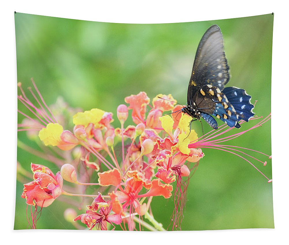 Blue Swallowtail Butterfly Tapestry featuring the photograph Swallowtail Butterfly Wings by Saija Lehtonen