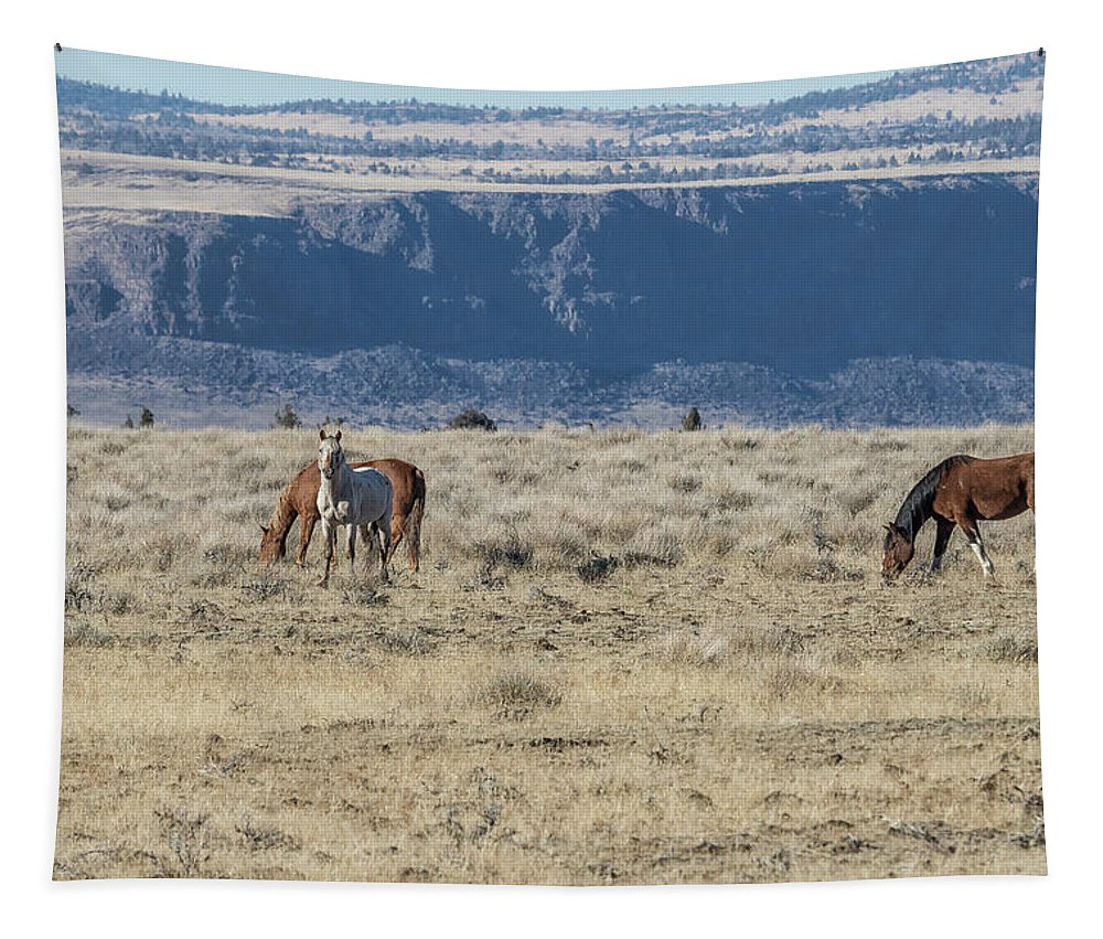 South Steens Tapestry featuring the photograph Territorial by Belinda Greb